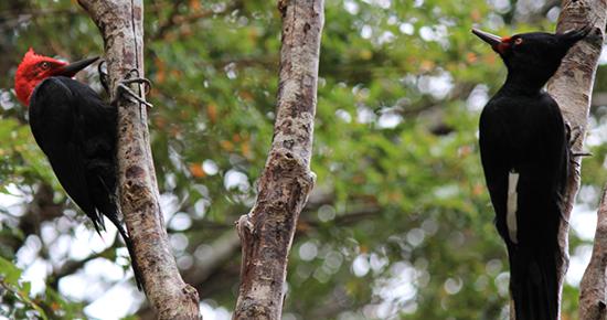 En medio del bosque - 1 9